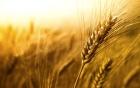 Полтавщина: хлібо-булочні вироби можуть