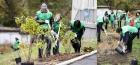 Полтавщина: співробітники Санофі долучилися до озеленення територій 30 лікарень в Україні