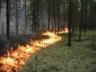 У Кобеляках приборкували лісову пожежу