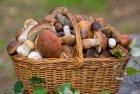 Полтавщина: дикорослі гриби – під забороною