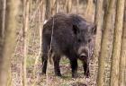 На Полтавщині за тиждень стартує сезон полювання на хутрових звірів